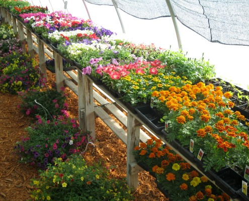 Potted Flowers in Nursery