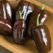 Chocolate Pepper