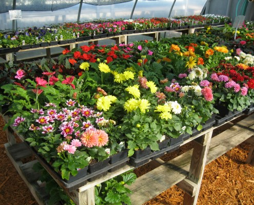 Blooming Flowers in Greenhouse