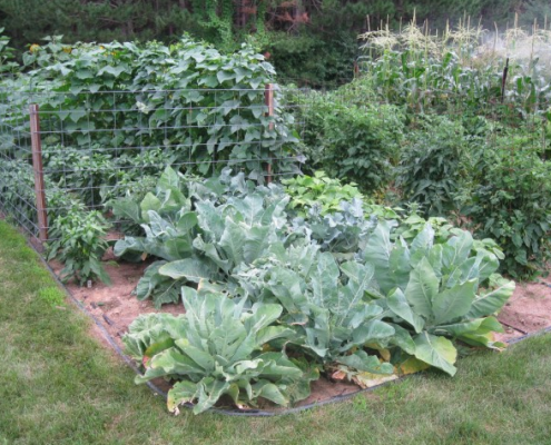 Garden on Drip Irrigation