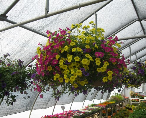 Hanging Flower Baskets Osceola WI