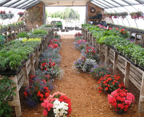 Potted Plants in Nursery