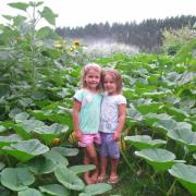 Pumpkins on Drip Irrigation