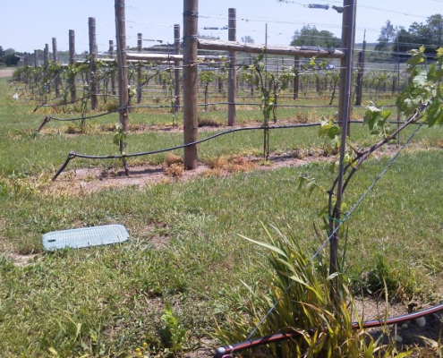 Vineyard Water Systems